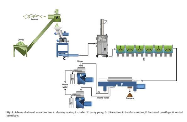 olive process